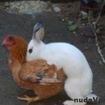 Odkiaľ sa berú veľkonočné vajíčka