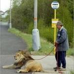 Venčenie mačičky
