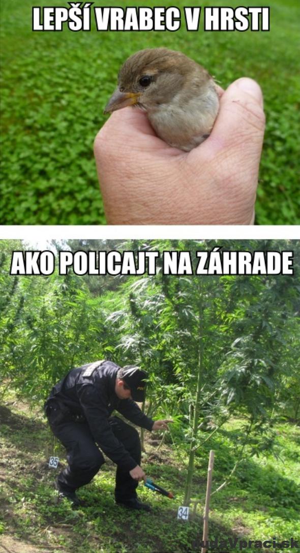 Lepší vrabec v hrsti
