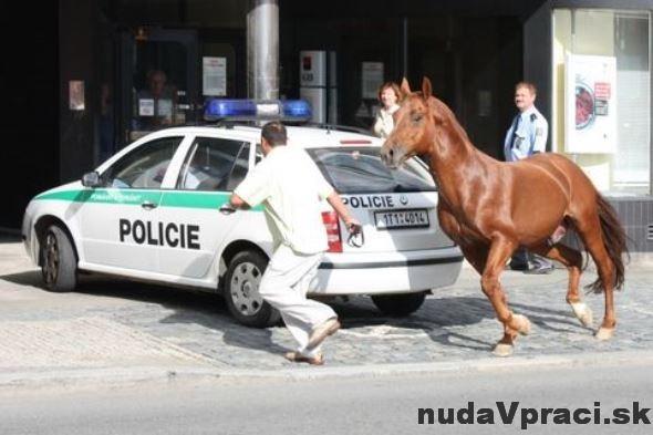 Kde nestačí policajný pes, pomôže kôň