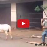 FAIL! Koňa používa na surfovanie na ulici