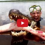 ViralBrothers: Kanadský žartík s aligátorom