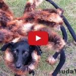 DESIVÉ! Ľudí straší obrovský mutant pavúka