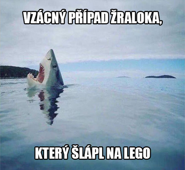 Vzácny prípad žraloka