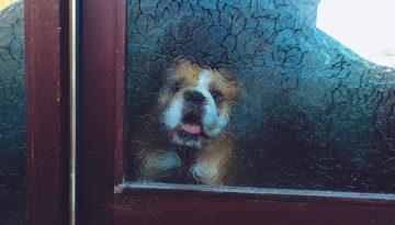 4 bláznovstvá, ktoré stvárajú psy, keď ich necháte samé
